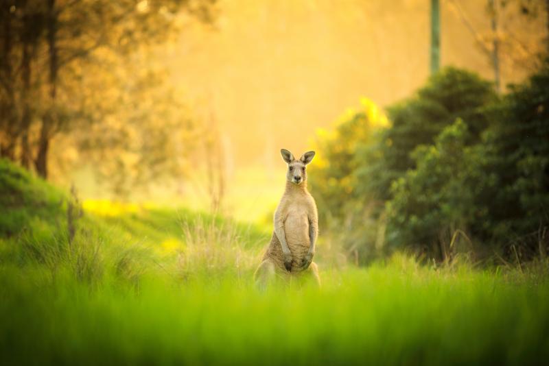 Excursiones de un día a Kangaroo Valley desde Sydney