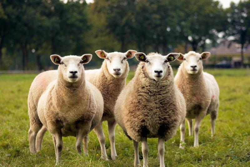 Estación de ovejas Tobruk excursiones de un día desde Sydney
