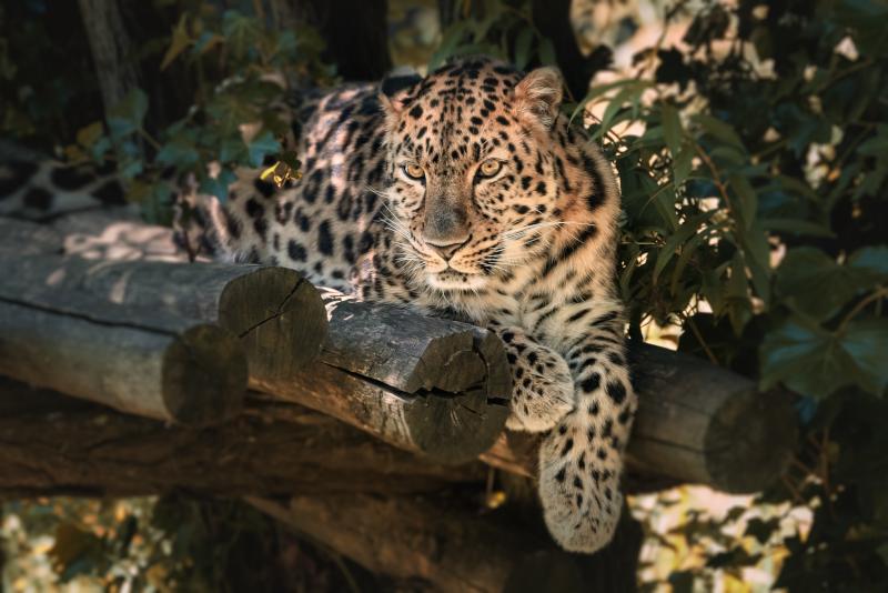 Werribee Open Range Zoo day trips from Melbourne