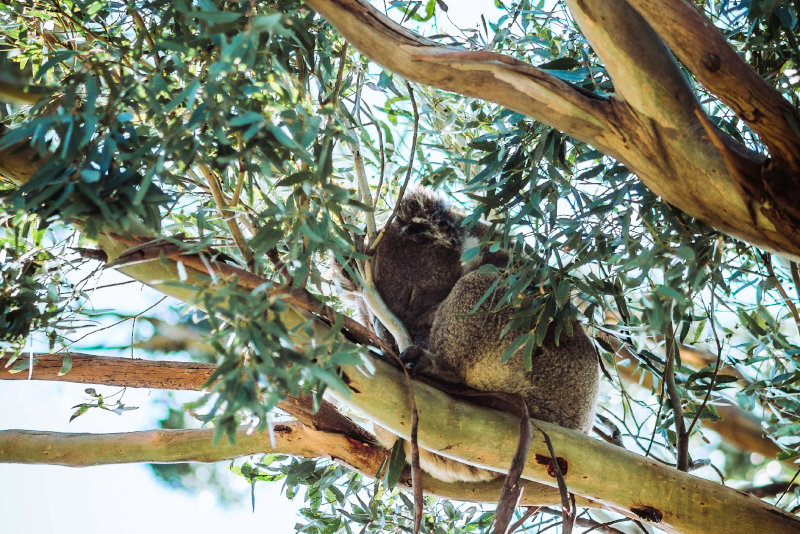 Sie Yangs Regional Park Tagesausflüge von Melbourne
