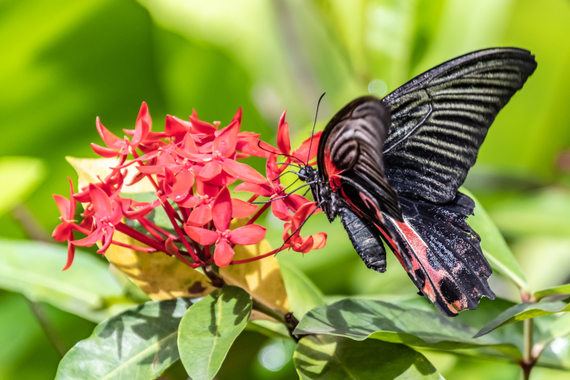 Butterfly Park - #20 best theme parks in Singapore