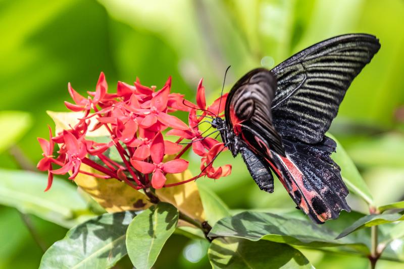 Butterfly Park - N ° 20 des meilleurs parcs d'attractions à Singapour