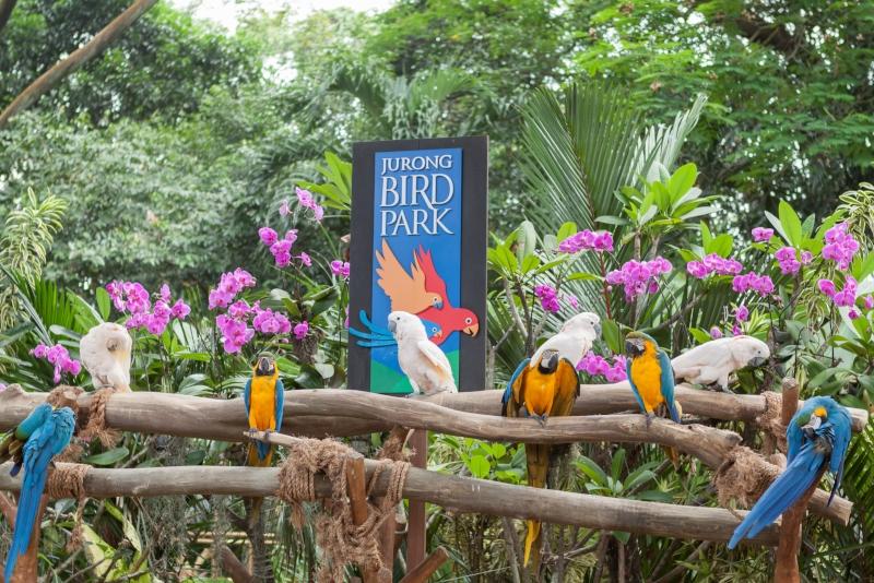 Jurong Bird Park - N ° 4 des meilleurs parcs d'attractions à Singapour
