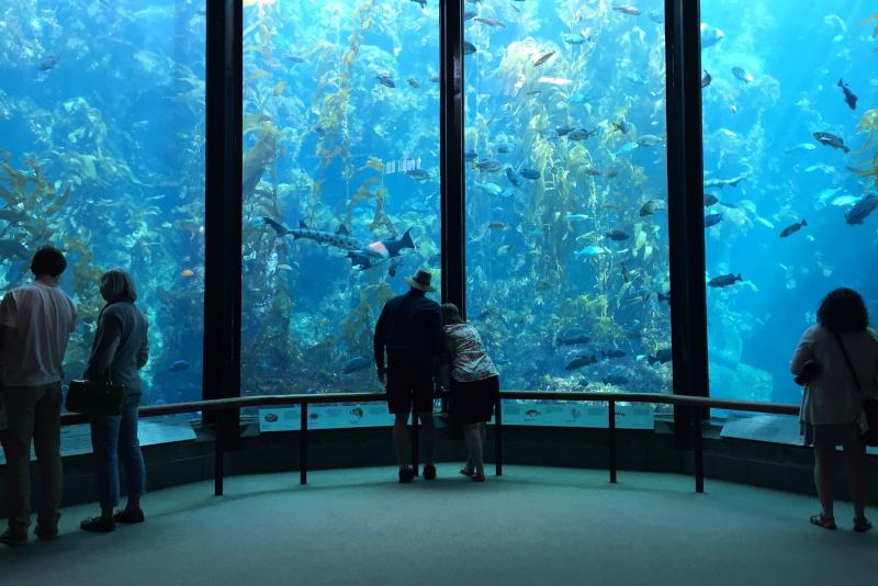 Monterey Bay Aquarium # 20 parcs d'attractions en Californie