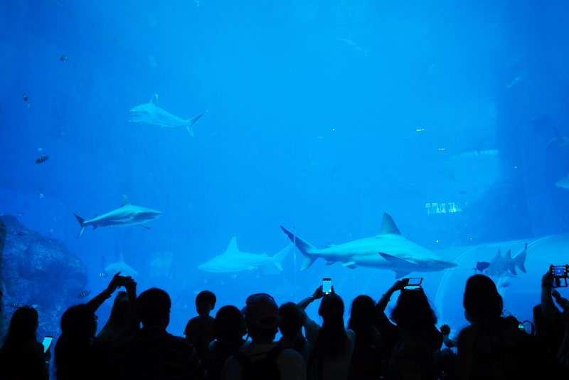 S.E.A Aquarium - #6 best theme parks in Singapore