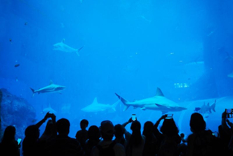 SEA Aquarium - N ° 6 des meilleurs parcs d'attractions à Singapour