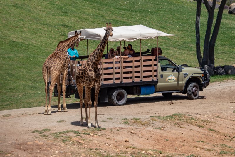 San Diego Zoo Safari Park # 10 parcs d'attractions en Californie