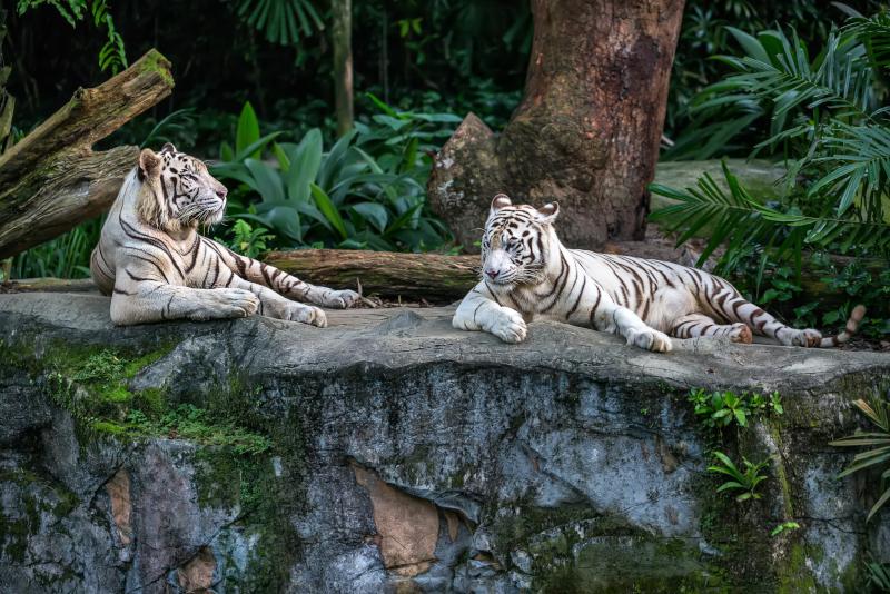 Zoo de Singapour - N ° 5 des meilleurs parcs d'attraction à Singapour