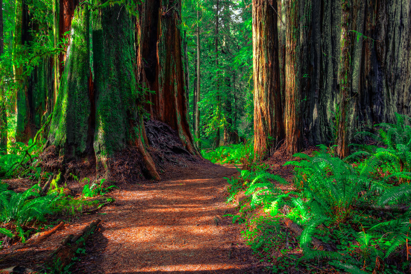 Armstrong Redwood State Reserve day trips from San Francisco