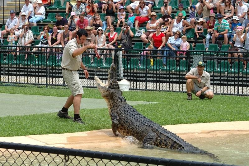Australia Zoo - #22 Gold Coast theme parks
