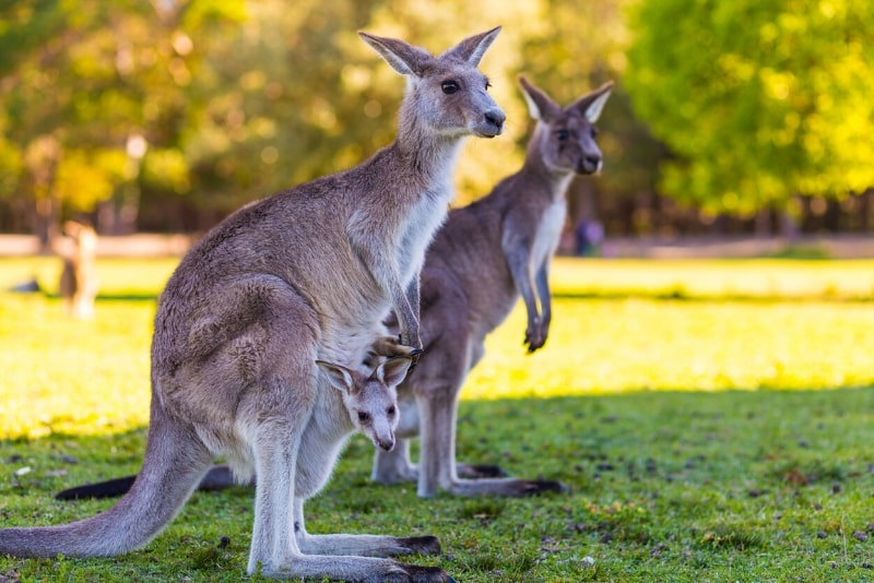 Currumbin Wildlife Sanctuary - #14 Gold Coast theme parks