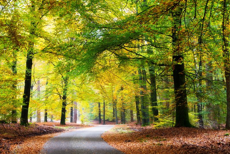 Gite di un giorno al Parco nazionale Hoge Veluwe da Amsterdam