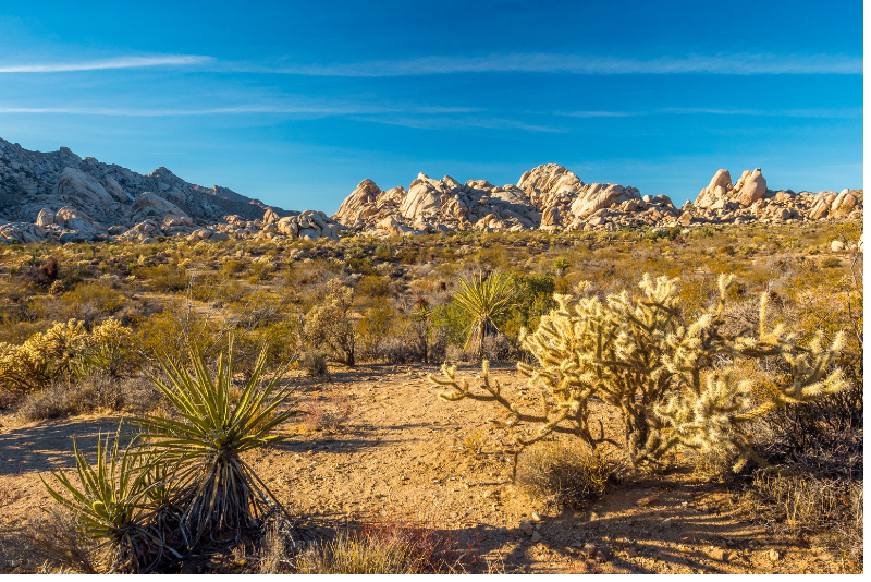 Mojave National Preserve day trips from Las Vegas