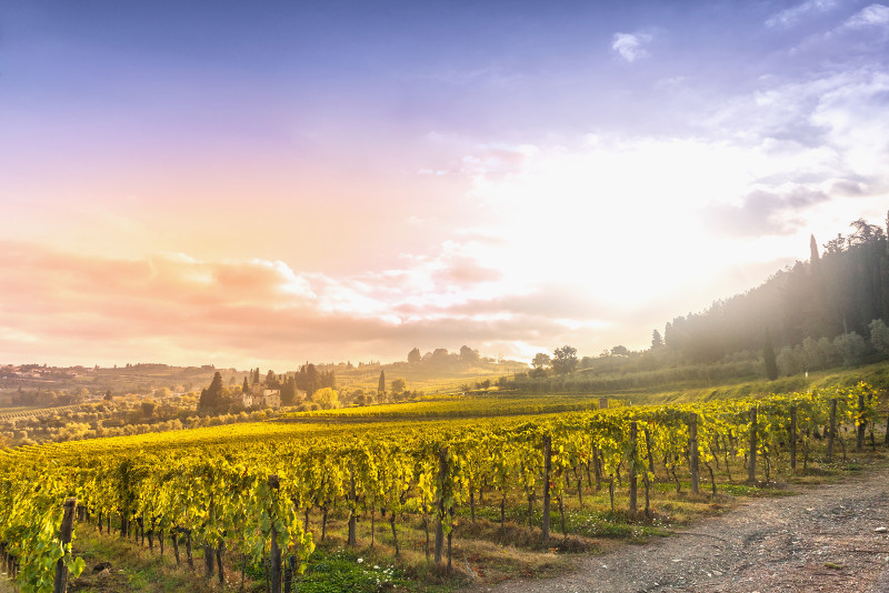 Napa Valley day trips from San Francisco