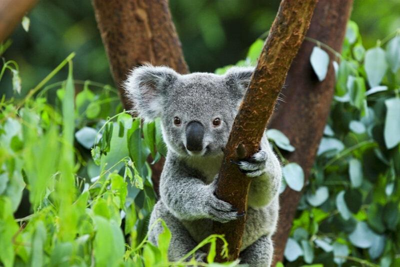 Paradise Country - #7 Gold Coast theme parks