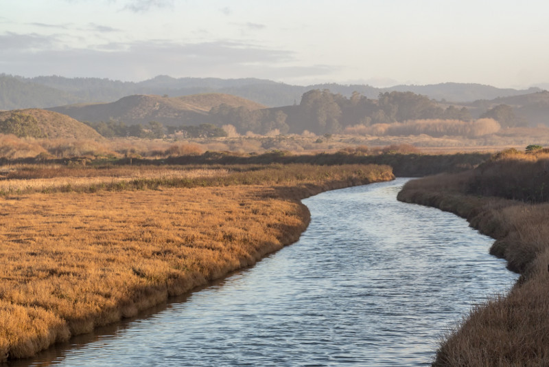 Pescadero Marsh Nature Reserve day trips from San Francisco
