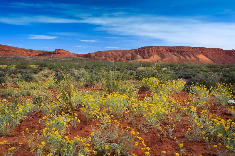 Tagesausflüge von Las Vegas zum Red Cliffs National Conservation Area