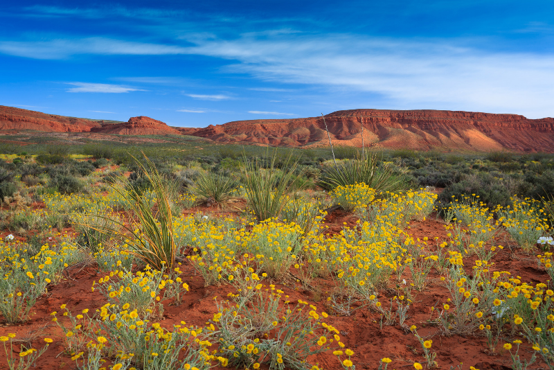 Red Cliffs National Conservation Area day trips from Las Vegas