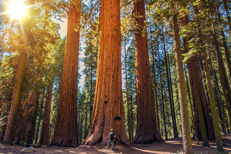 Sequoia National Park day trips from San Francisco