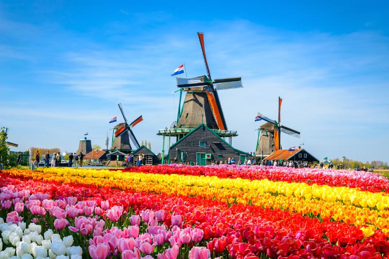 Tagesausflüge nach Zaanse Schans ab Amsterdam