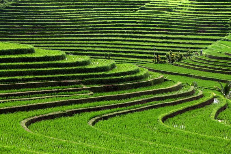 Ubud Electric Bike Tour to Tegallalang Rice Terraces