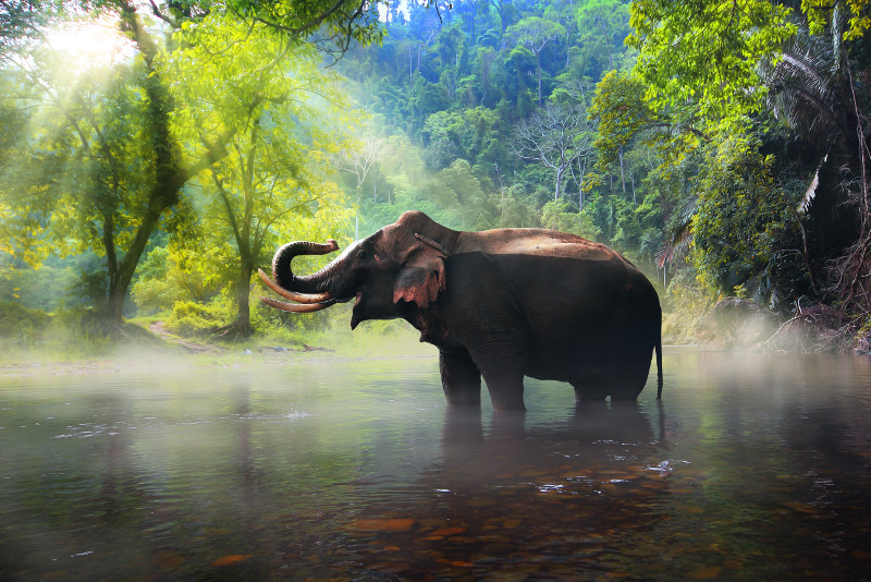 From Bangkok Elephant Sanctuary Day Trip & Private Transfer