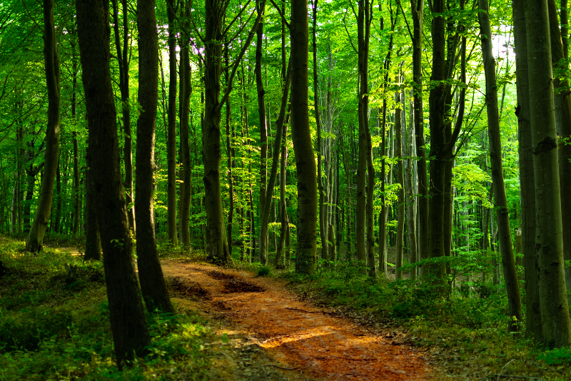 Belgrade Forest day trips from Istanbul