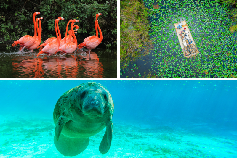 Crystal River Tour con Everglades Airboat Ride e Manatee Adventures