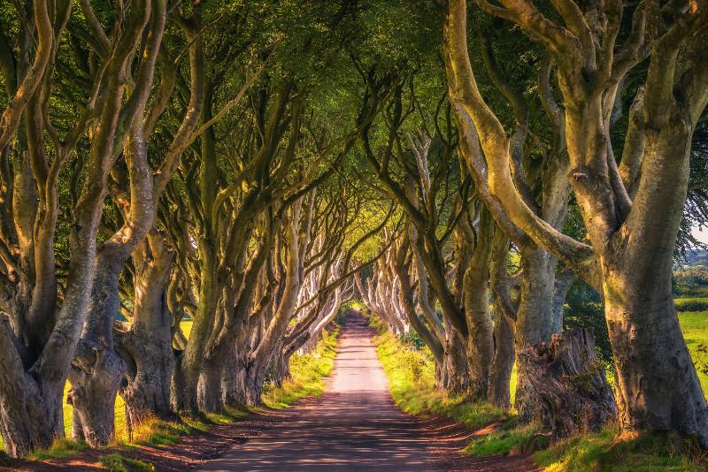 Dark Hedges Game of Thrones filming location