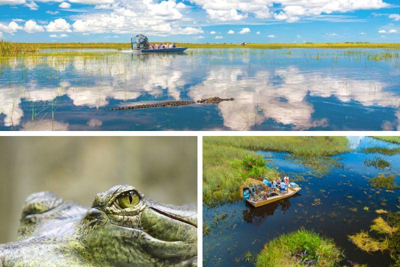 Everglades Airboat Tour & Gator Boys Alligator Rescue Show
