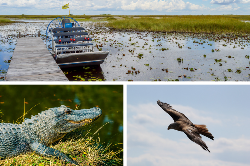 Everglades Family Adventure Tour da Greater Fort Myers / Napoli e dintorni