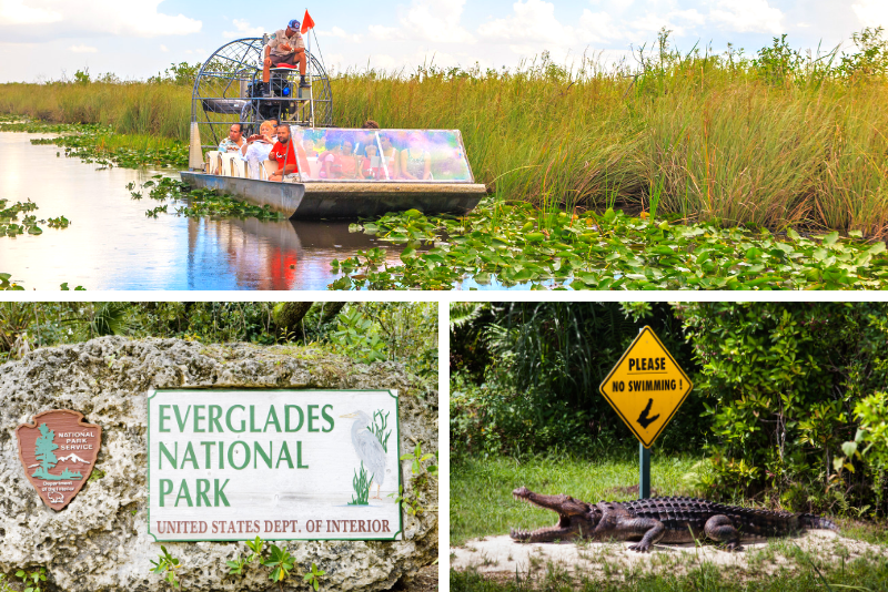 Everglades National Park Airboat Tour and Wildlife Show