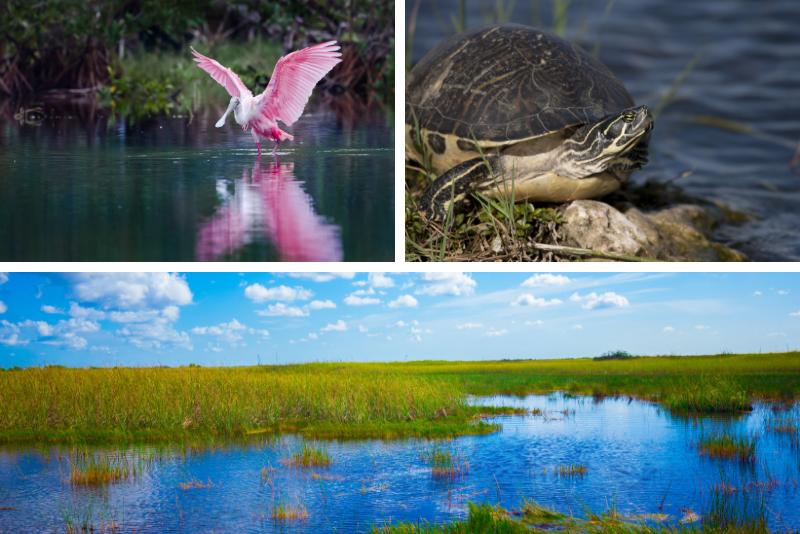 Everglades Swamp Walk con un recorrido en barco naturalista y diez mil islas