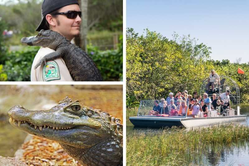 Paseo en hidrodeslizador por los Everglades de Florida y aventura en Gatorland