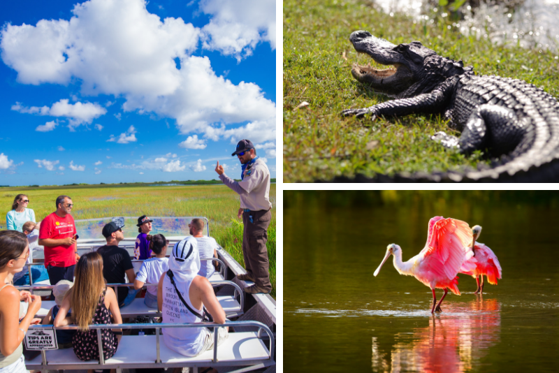 From Miami: Everglades Park Alligator & Airboat Tour