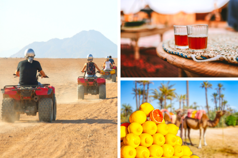 Marrakech: Half-Day Desert Quad & Dromedary Tour