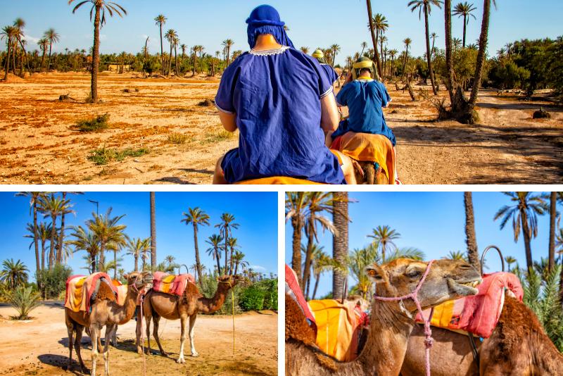 Marrakech Rock Desert and Palm Grove Camel Ride with Tea