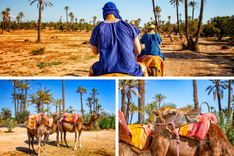 Marrakech Rock Desert and Palm Grove Camel Ride with Tea