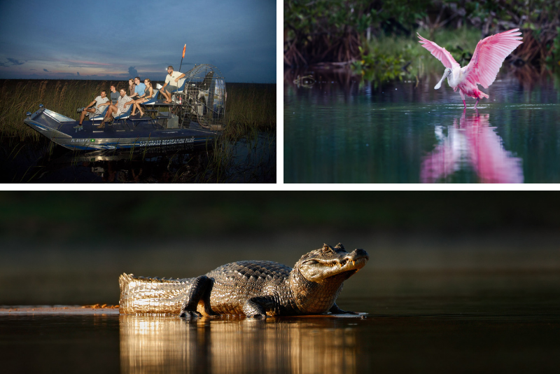 Orlando: tour in airboat di Everglades Moonlight Swamp Safari