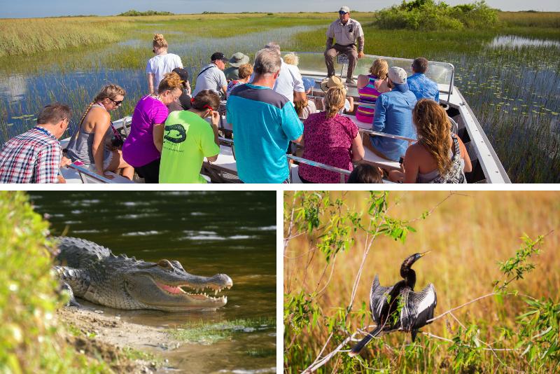 Orlando: Parque acuático y de vida salvaje Wild Florida Everglades