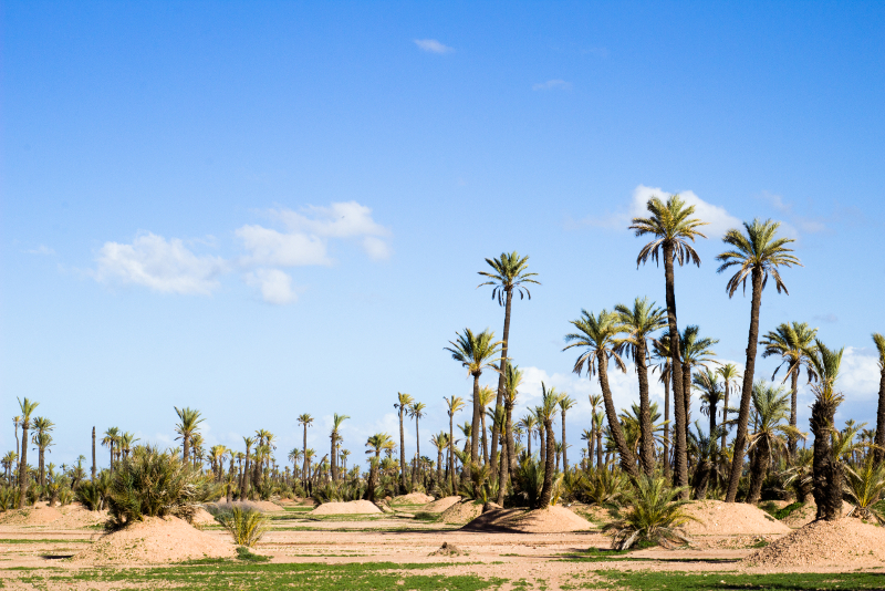 Palm Groves day trips from Marrakech