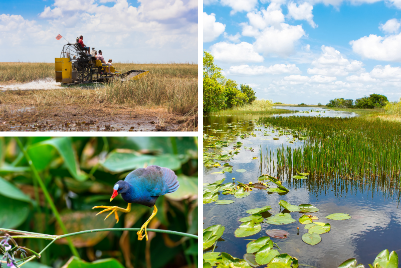 Tour privato: Everglades Sightseeing presso Big Cypress National Preserve