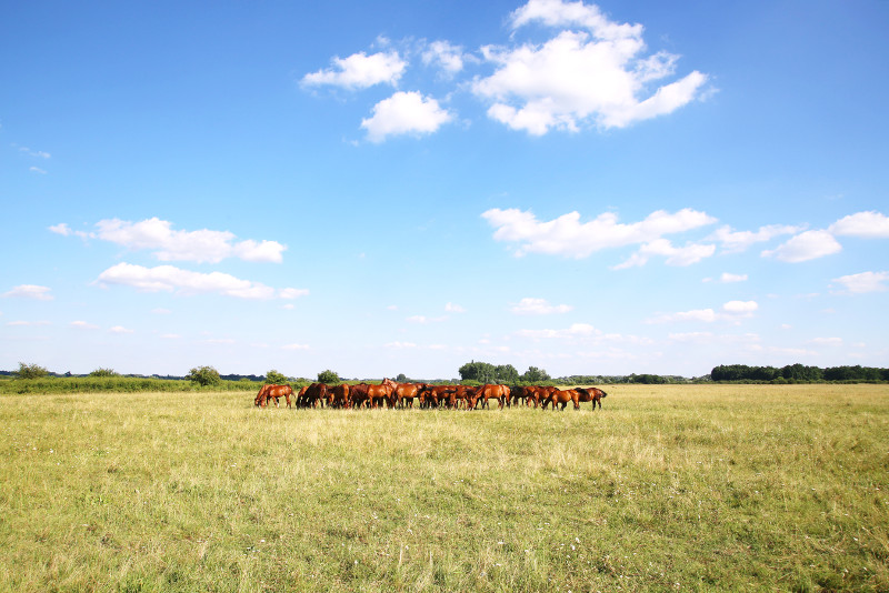 Puszta Great Plains day trips from Budapest