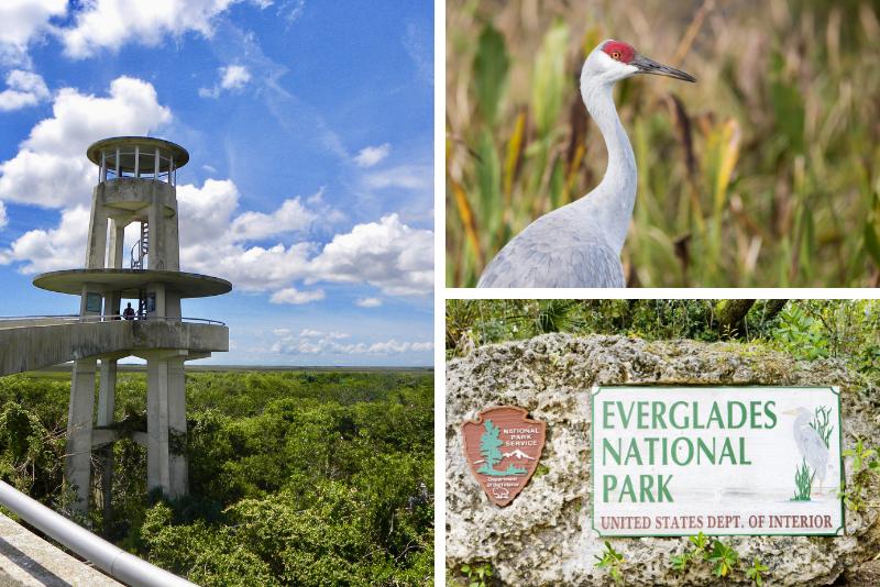 Tour per piccoli gruppi: gita di un giorno nelle Everglades da Greater Fort Myers / Napoli