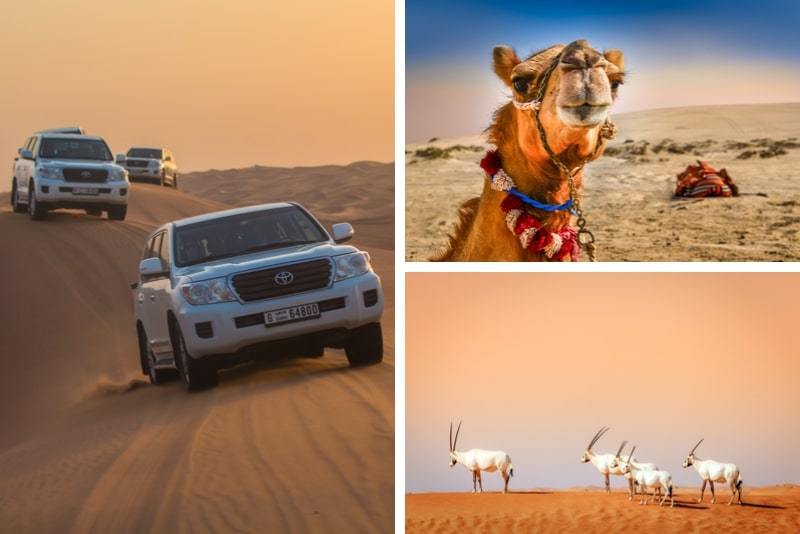 Dubai Afternoon Desert Safari et dîner BBQ