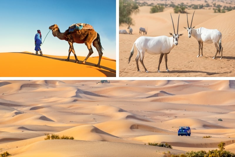 Desert Experience Dinner and Emirati Activities with Vintage Land Rover Transport from Dubai