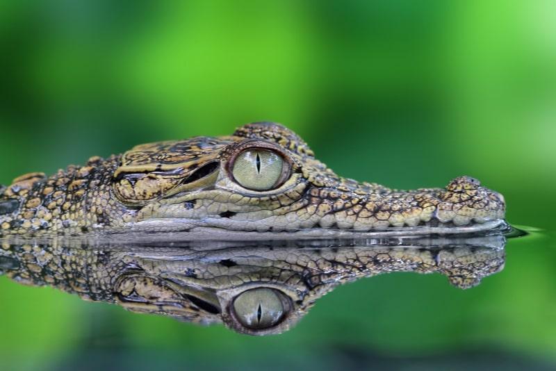Croco Cun Zoo - Cancun Ausflüge