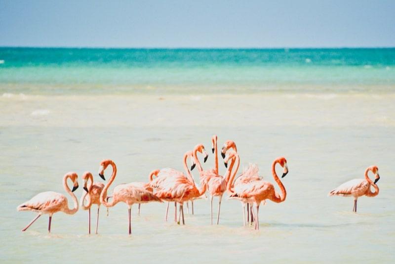 Isla Holbox - Cancun Ausflüge
