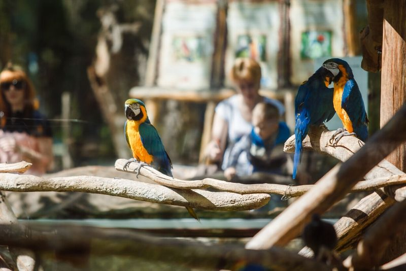 cheap London Zoo tickets