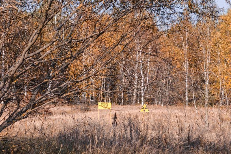 Forêt rouge à Tchernobyl